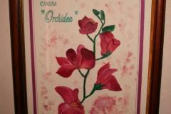 camera-orchidea